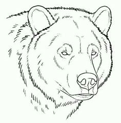 bear face drawing grizzly bear drawing grizzly bear tattoos grizzly bears drawings