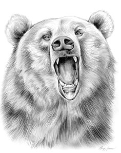 pencil art drawings grizzly bear in graphite pencil by gregchapin on deviantart grizzly bear
