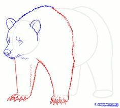 how to draw grizzly bears step 13 grizzly bear drawing bear sketch nature drawing