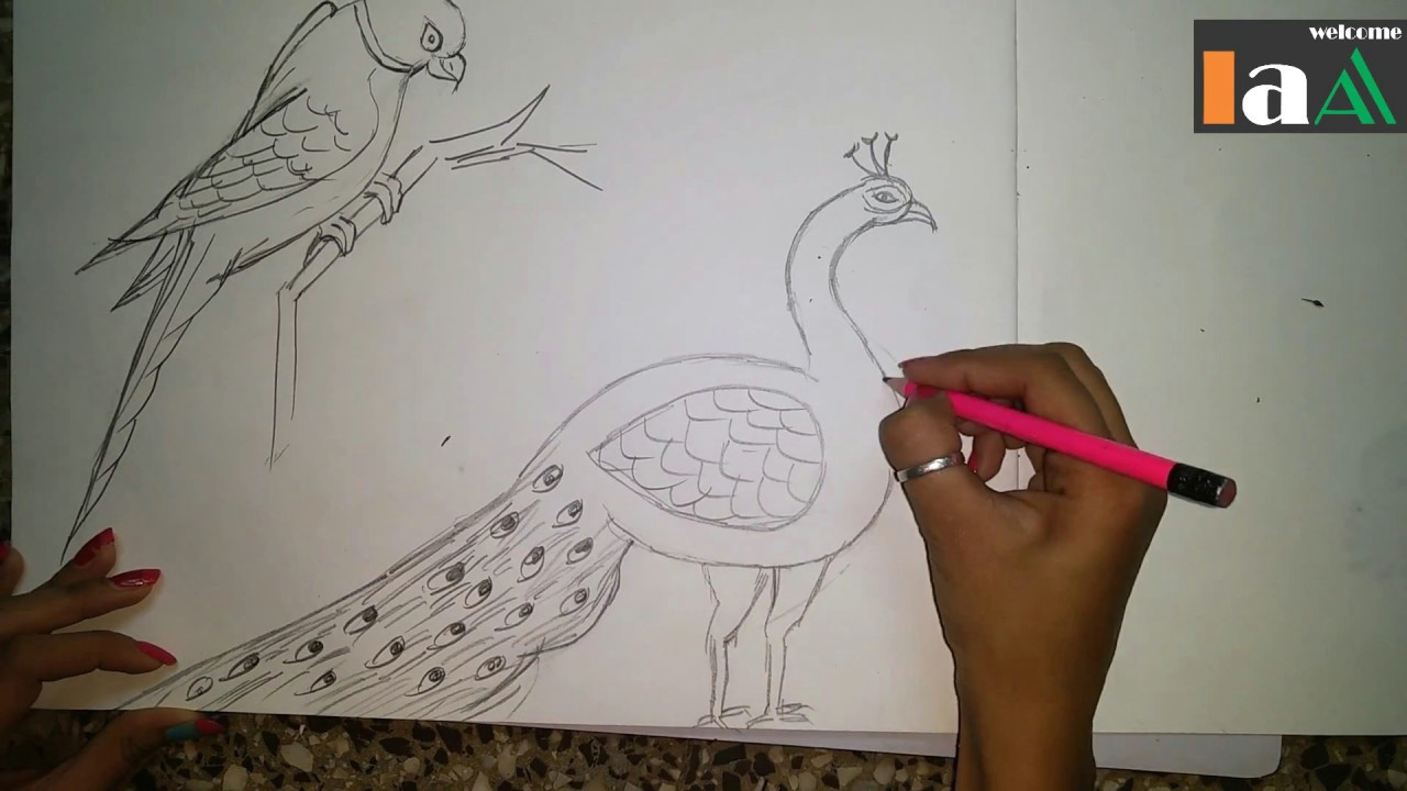 how to draw a peacock and parrot step by step easy