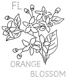 coloring pictures of the orange blossom flower colors petals cream 3823 centers pale yellow 4080