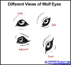the two top eyes are sketches of a wolf eye from the side and 3