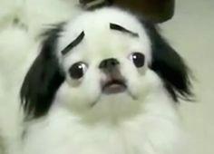dog with eyebrows tumblr