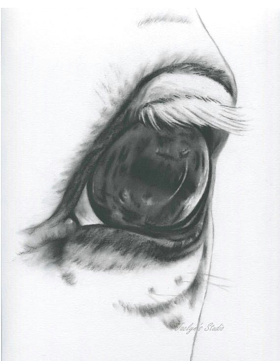 white horse eye horse drawing charcoal eye horse art farm