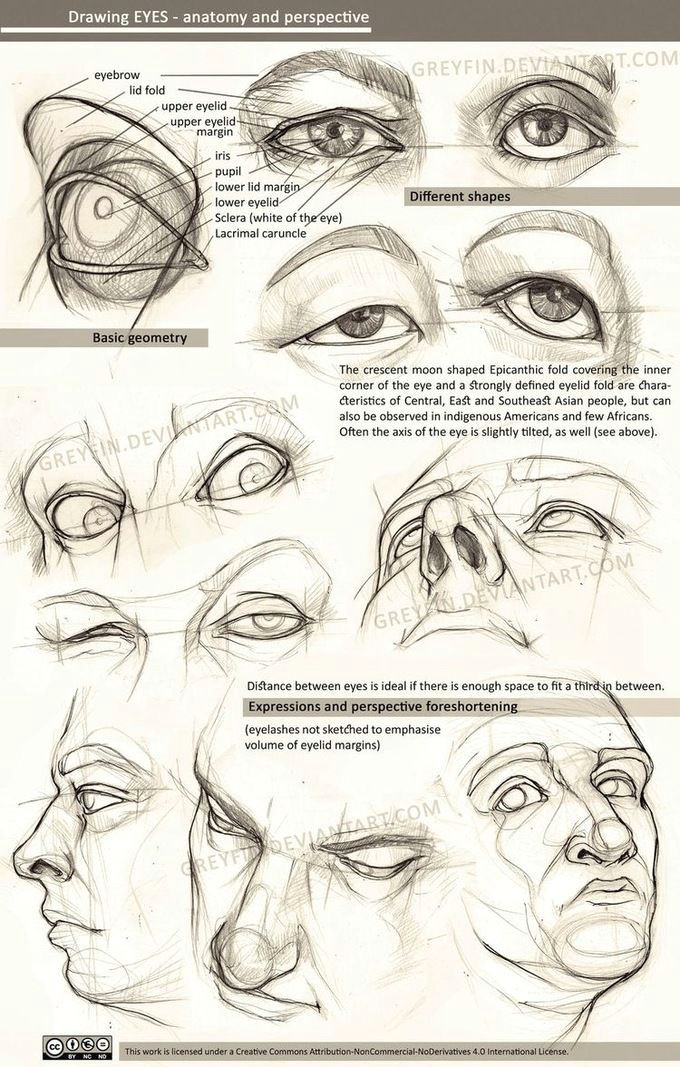 realistic drawing reference dump imgur