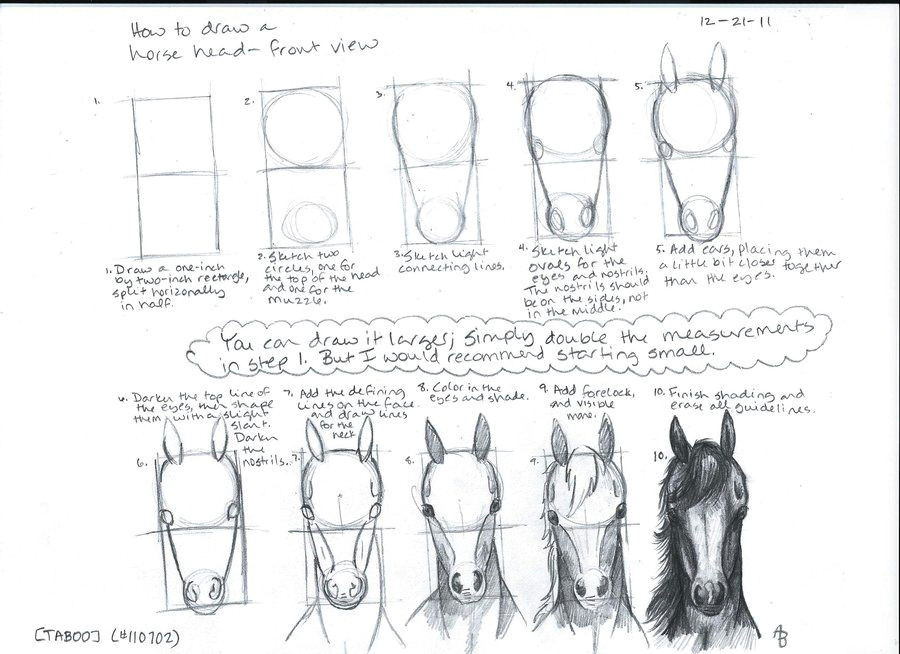 how to draw a horse head front view by a n 0 n y m o u s on deviantart