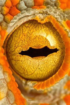 1000 images about eyes on pinterest eye close up close up and