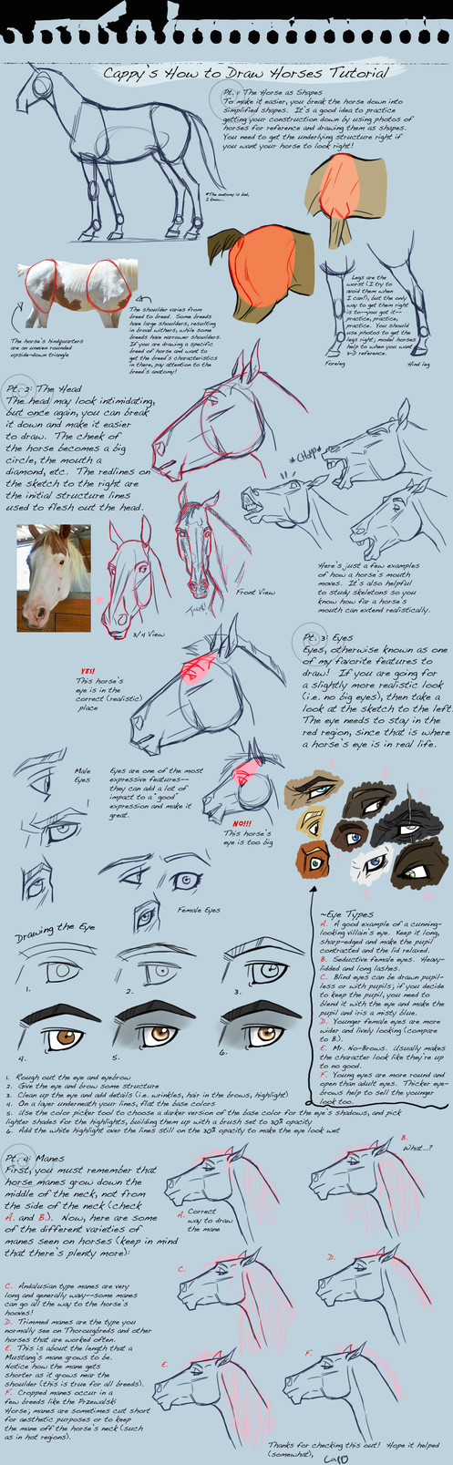 how to draw horses tutorial by ladypep