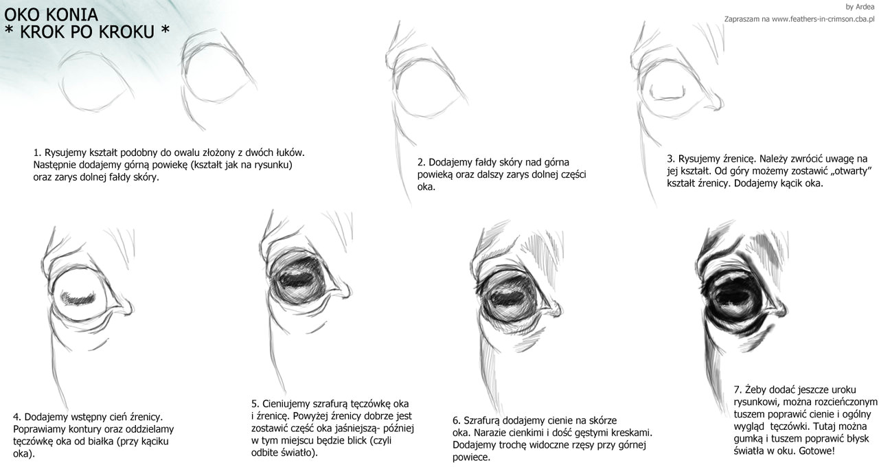 horse eye tutorial by ardea4 d5lku5r jpg