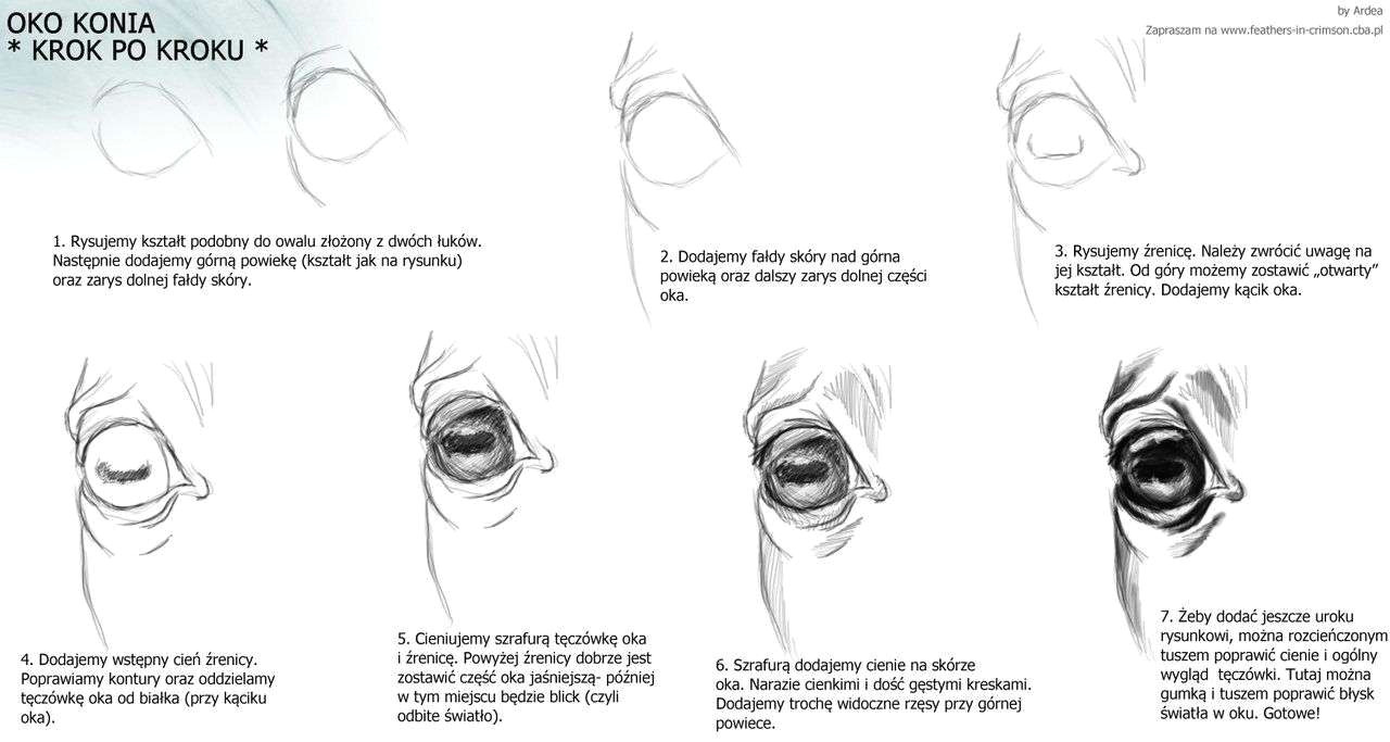 30 how to draw an eye step by step in pencil appealing horse tutorial drawing google
