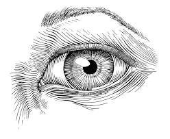 resultado de imagen para pen sketches of nature moleskine