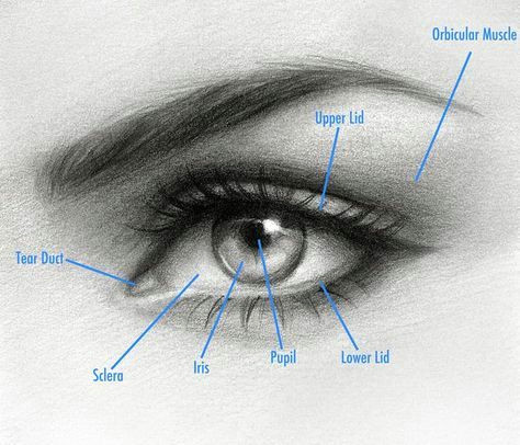 how to draw an eye by natalie larin drawing drawings realistic eye drawing eye drawing tutorials