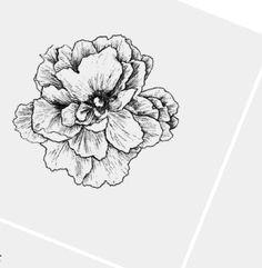 flower sketches flower drawings