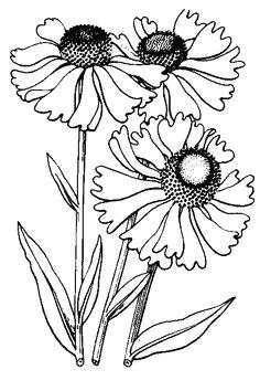 loving the digi flowers