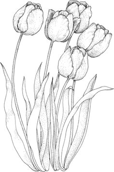 click to see printable version of four tulips coloring page tulip drawing flower pattern drawing