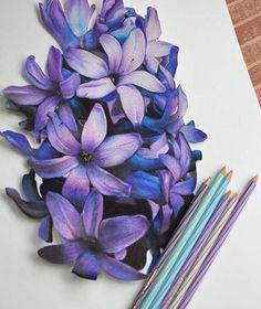 colored pencil flowers color pencil art colored pencil artwork flower pencil drawings colored