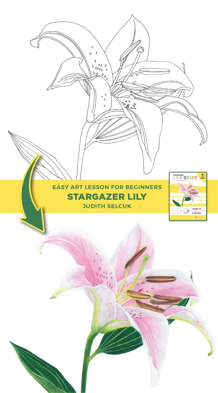 jumpstart level 3 stargazer lily in 2018 art to try pinterest drawings colored pencils and pencil drawing tutorials