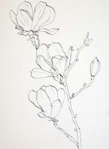 drawing pink magnolia flowers pen and ink plus watercolor wash illustration blume sketches of