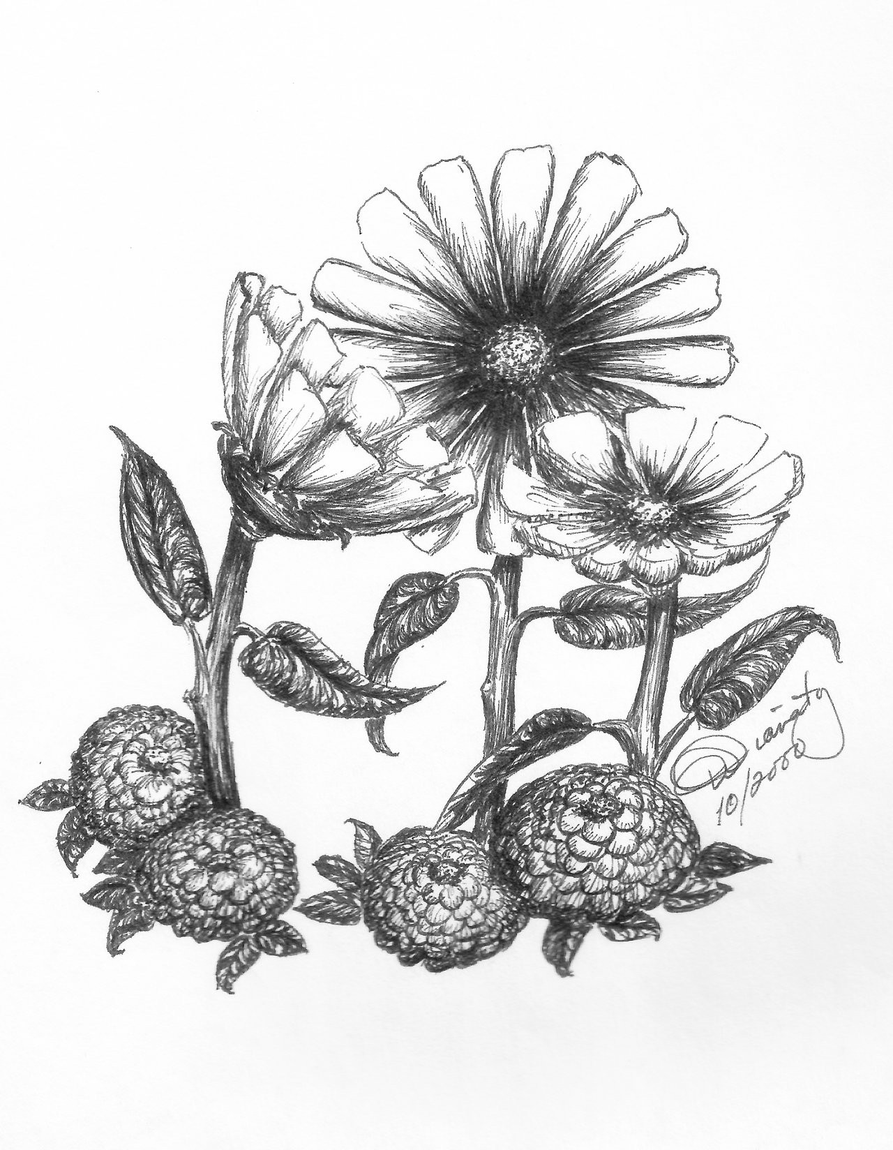 daisiesmums penandink jpg