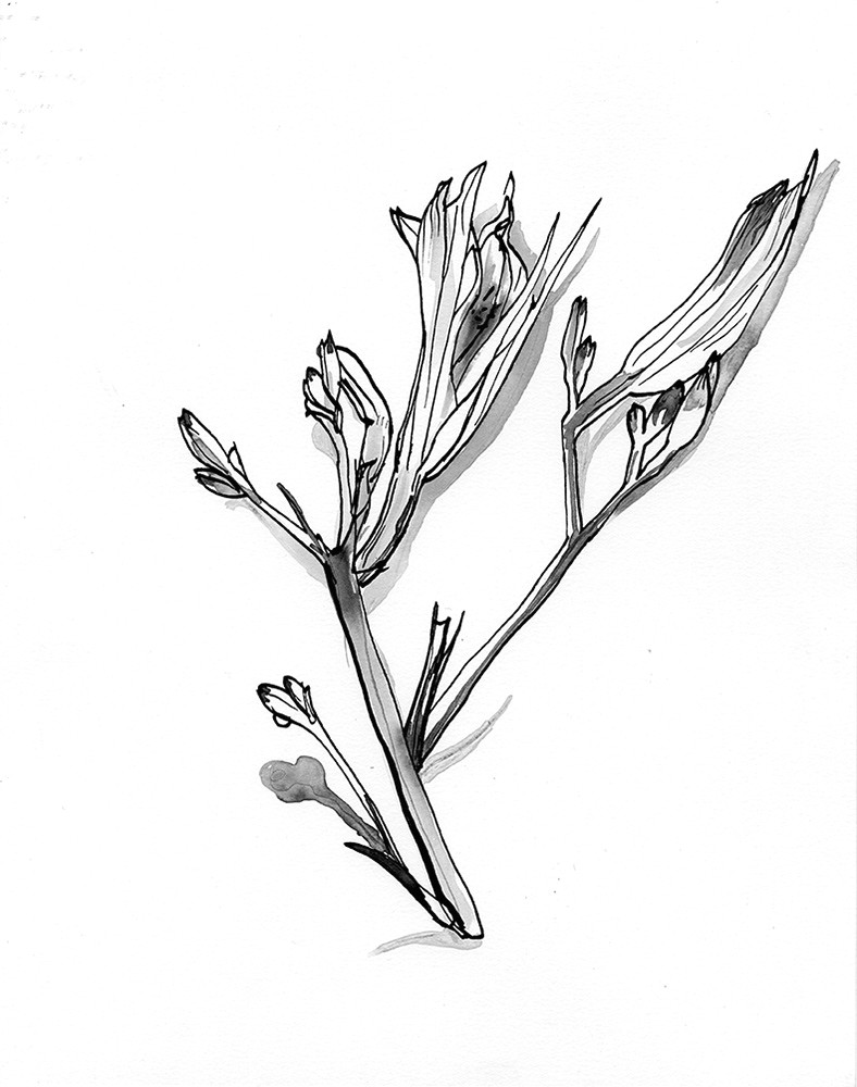 a poster series that evolved from pen and ink flower drawings