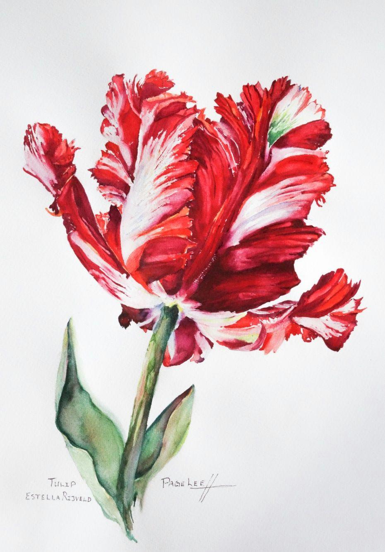 page lee watercolor of carolyne roehm tulip