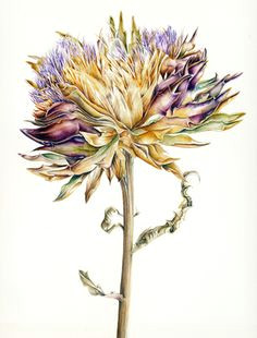 jill winch the society of botanical artists