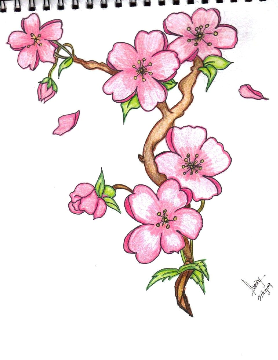 discover ideas about flower drawings with color