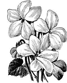 violet drawing violet flower tattoos birth flower tattoos violet tattoo black and white