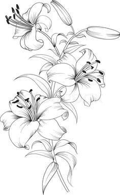 day lily sketch artist and source unknown