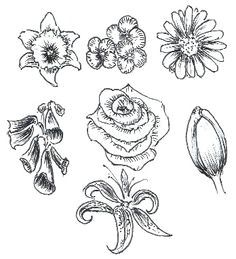 learn to draw flowers tutorial doodle drawings drawing sketches flower sketches doodle