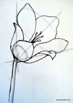 dion dior tutorial drawing bowl shaped flowers i never really thought about doing it this way shows what i know about drawing eh but this seems