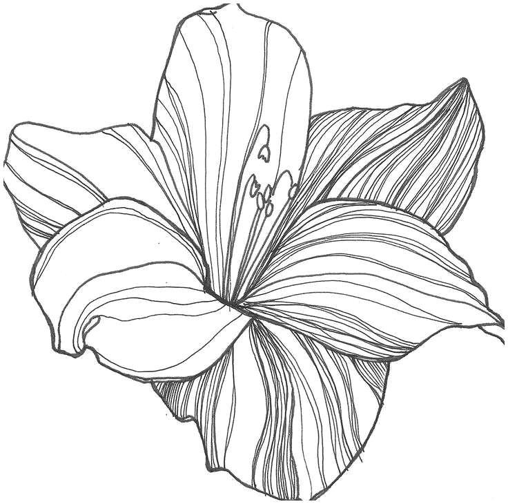 drawings flowers s s media cache ak0 pinimg originals 0d 1d 64 drawing flowers