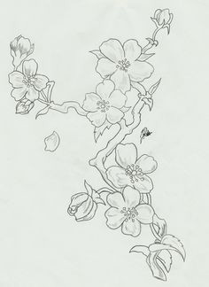flower sketches flower drawings cherry blossom watercolor cherry blossom drawing blossom flower