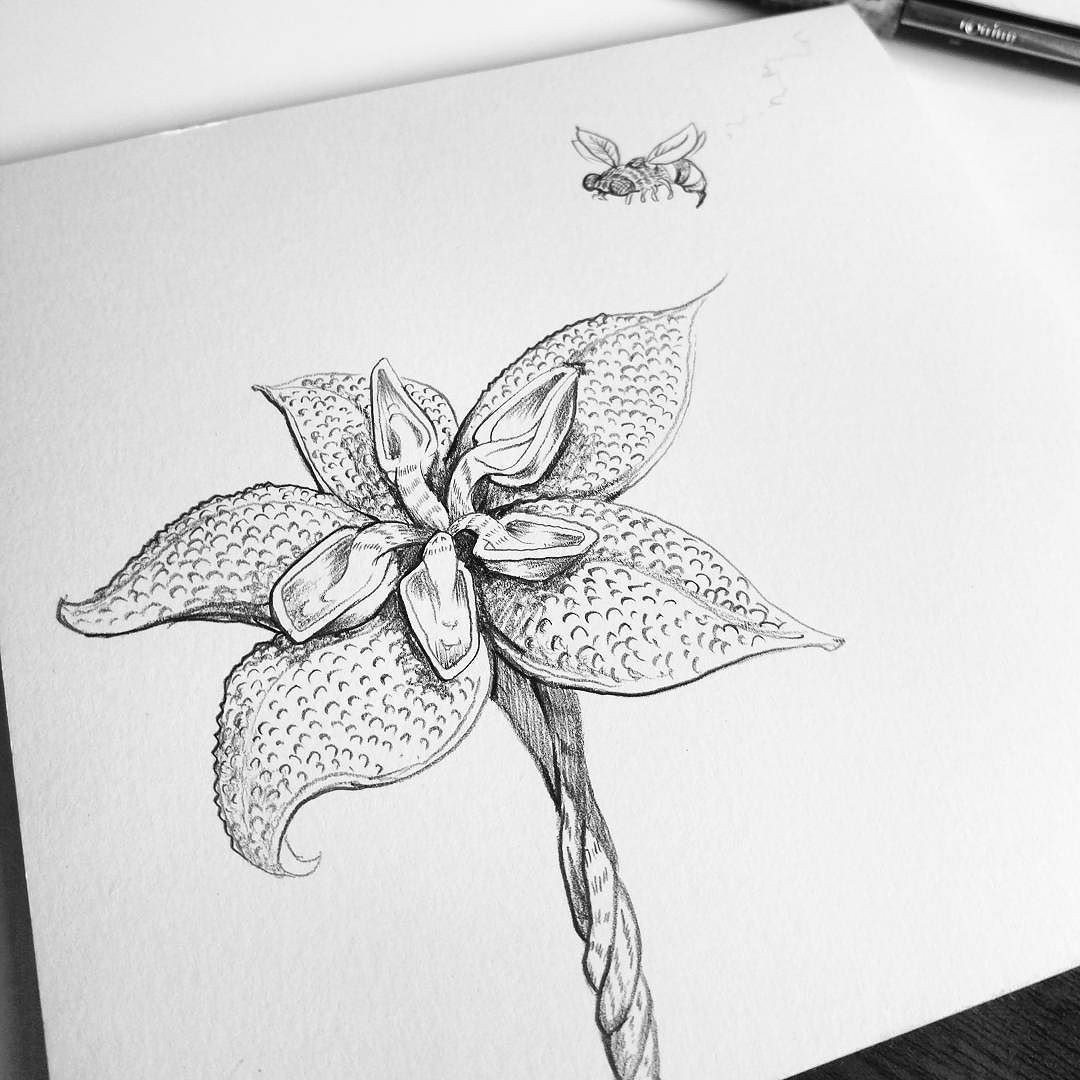 creating fantasy flowers for fun pencil drawing doodle floral flower wasp bee garden illustration blackandwhite