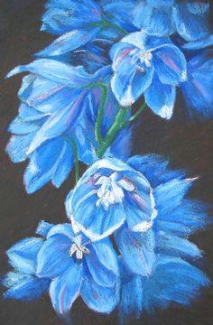 oil pastel on black paper marion s floral art blog chalk pastel art oil pastel
