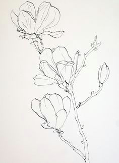 pen drawings of flowers completed ink drawing of pink magnolia flowers prior to laying down a