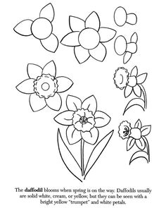how to draw a daffodill drawing skills drawing lessons drawing board flower doodles