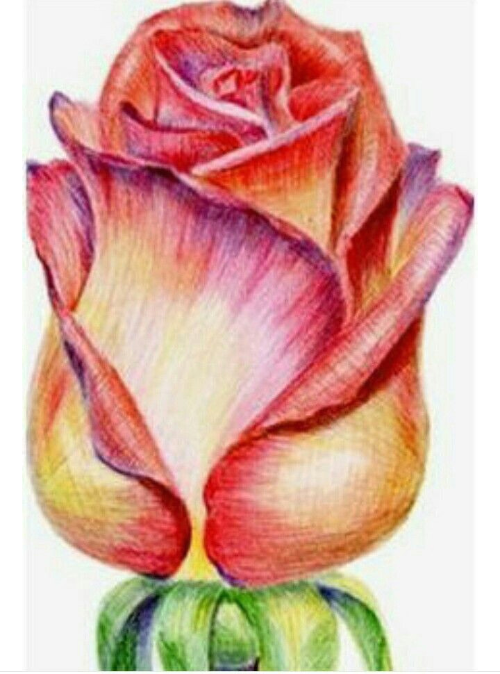 drawings with colored pencils color pencil drawings pencil sketches easy rose drawings