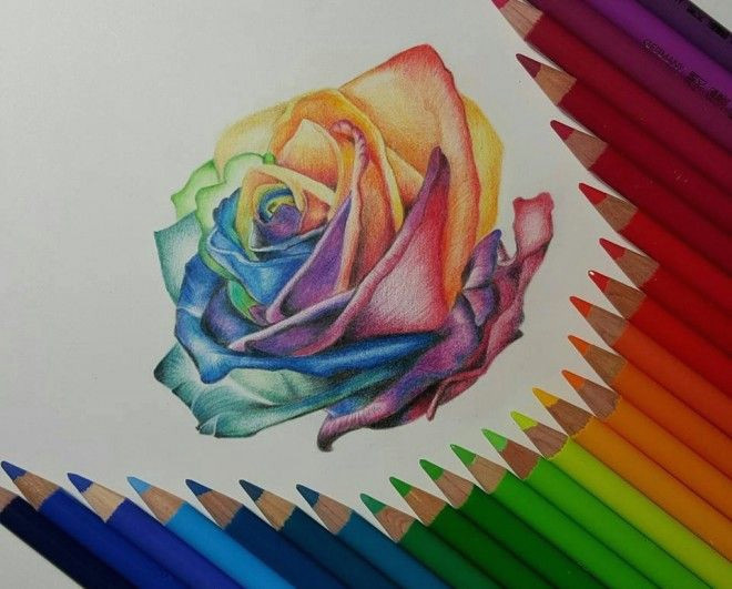 rose color pencil drawing by gaby sabbagh