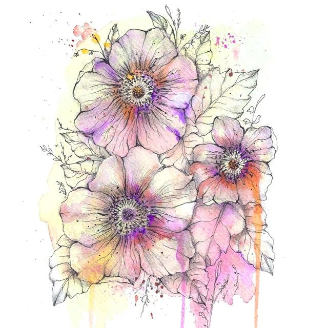 iconosquare instagram webviewer watercolour drawings watercolor pencils drawing sketches art drawings