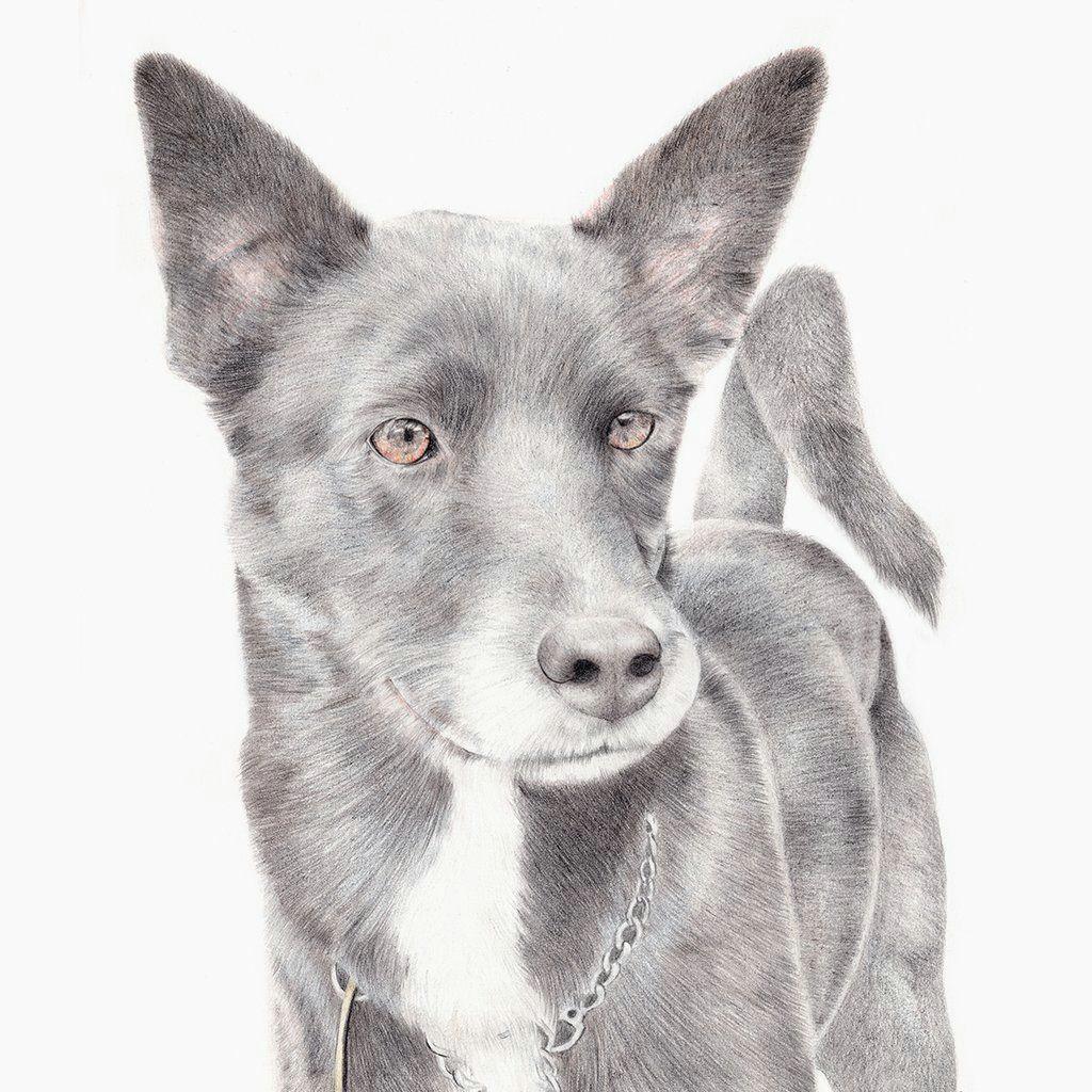 custom pet portrait dog drawing dog portrait cattle dog dog lover