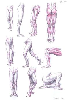 anatomy studies join us