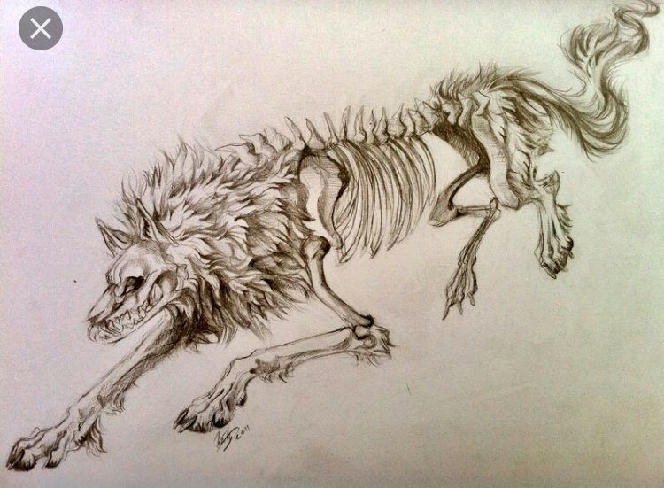 half of a two wolves tattoo concept i want to get rough idea not