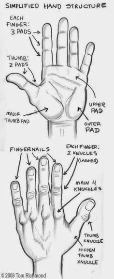 the structure of hand study realistic hyper art pencil art 3d art
