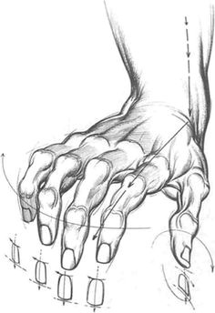 today s drawing class how to draw hands hands look complicated to draw but