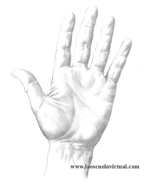 como dibujar manos en diferentes posiciones su forma y anatomia t how to draw hands pinterest drawings art corner and graphite