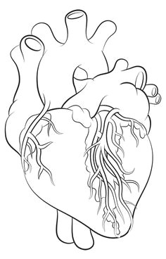 how to draw a heart science drawing lesson heart anatomy drawing human heart drawing