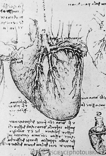 heart and coronary arteries leonardo davinci