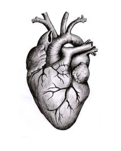 related image heart anatomy drawing anatomical heart drawing anatomy art heart anatomy tattoo