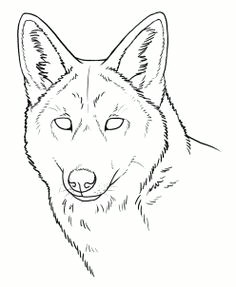 how to draw coyotes prairie wolf